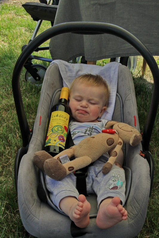 Legifjabb Lukácsy békésen szundikál egy üveg bor mellett