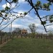 Eladó pince és szőlő