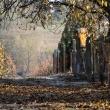 Őszi séta a Strázsahegyen