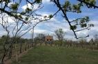 Monori Pincefalu, eladó pince és szőlő