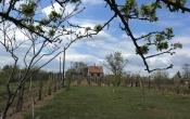Monori Pincefalu eladó szőlő és pince
