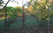 Eladó szőlő, présház és pince, Monori Pincefala Oportó sor
