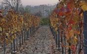 őszi kirándulás a pincefaluban