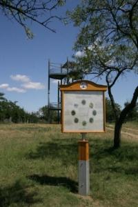 Szőlőtermesztési Módok, Monori Pincefalu
