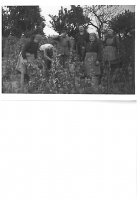Baki Lajos szürete 1970-1975 között