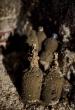 Csapatépítő túra a Monori Pincefaluban