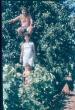 Család a szőlőben 1970