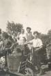 Szüret a Strázsa-hegyen 1949