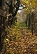 Monori Pincefalu, ősz a Strázsa-hegyen
